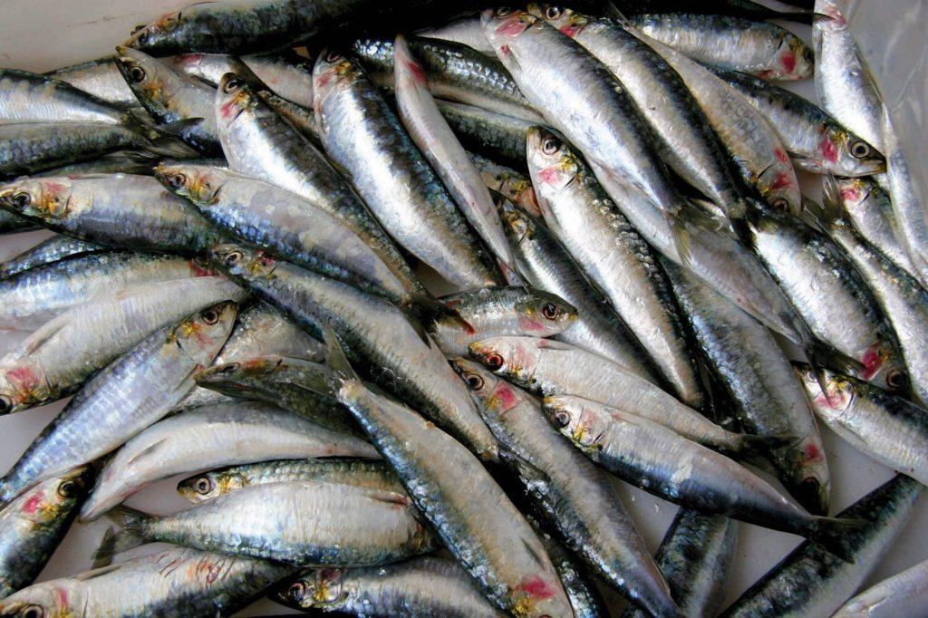 przetwórstwo rybne