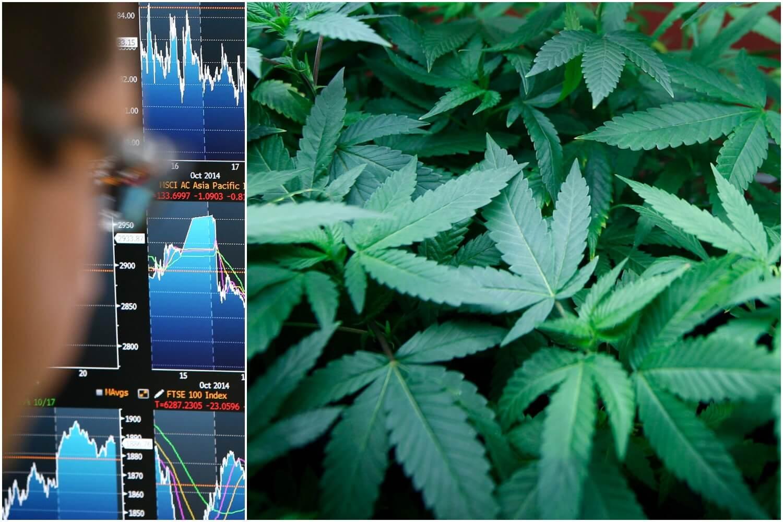 inwestycje w marihuanę